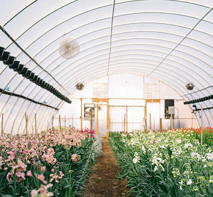 Sunny meadows flower farm mightylinksfo